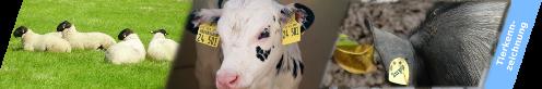 Tierkennzeichnung